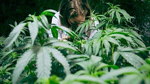 LegalMarajuana