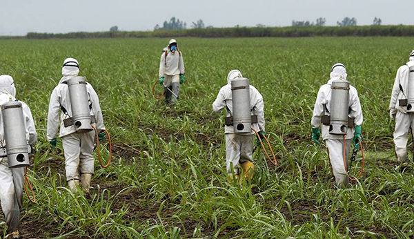 Erin Brockovich Comments on Canada Food Inspection Agency Glyphosate Residue Testing Report
