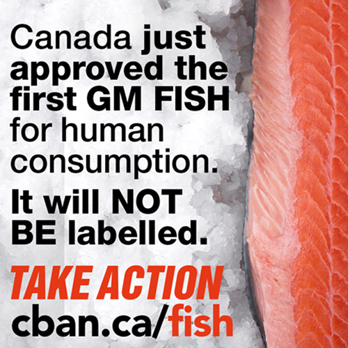 Canada Approved Gm Fish Website 500 x 500